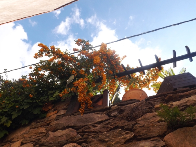 boules orange