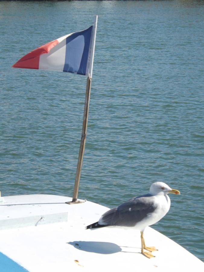 mouette et drapeau