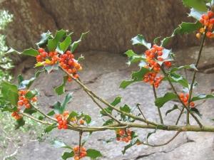 plante orange