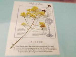 fleur de pastel