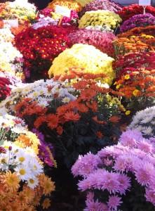 fleurs des morts