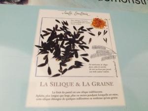 la silique et la graine
