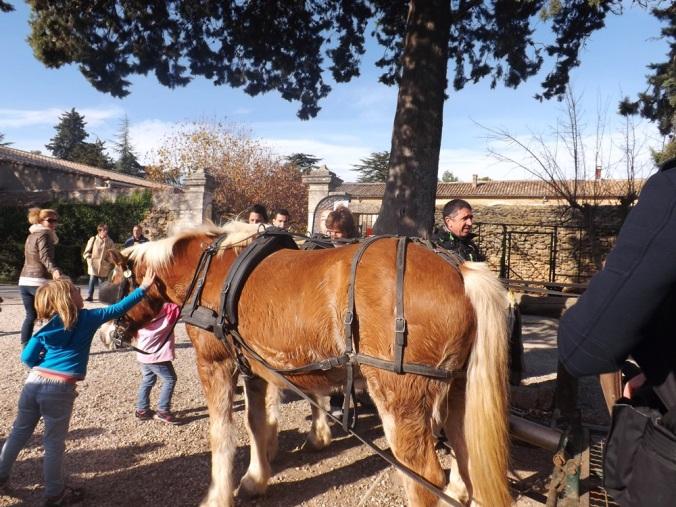 poneys de l'attelage
