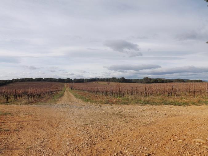 vignes devant la cabane