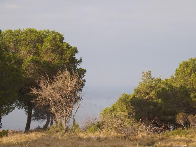 etang de thau vu a travers les arbres de la foret domaniale des pierres blanches a sete