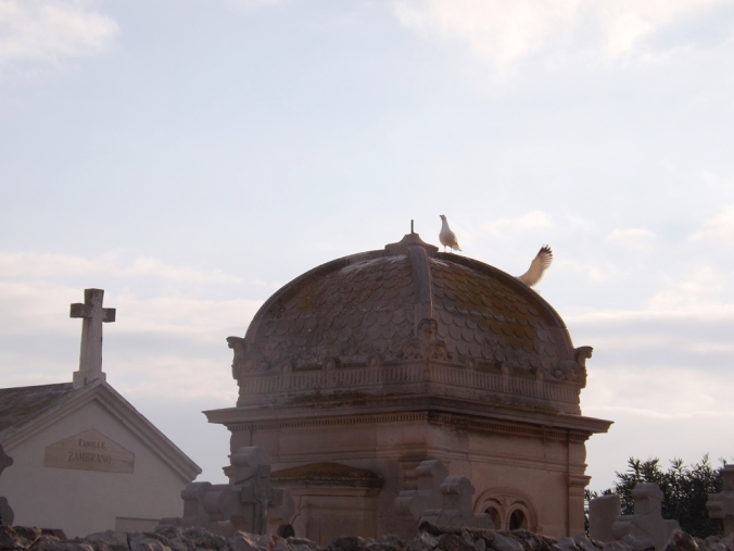 mouettes sur le toit d'une tombe cimetiere marin de sete