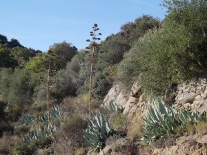 cactus village Eus