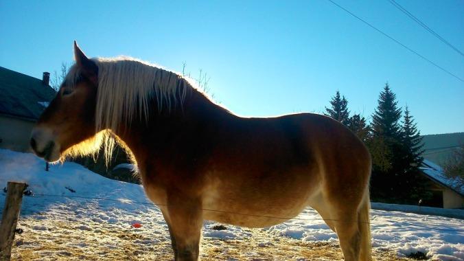 cheval dans une ferme du Vercors