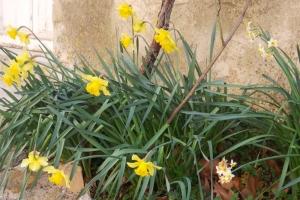 fleurs rue colbert villeneuvette