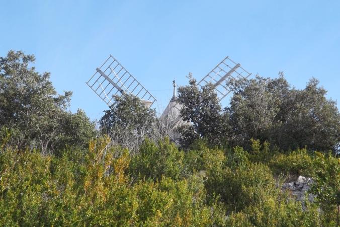 les ailes du moulin à vent de Faugeres vues à travers la garrigue
