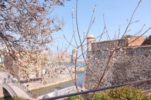 arbres en fleurs vue sur baie de collioure