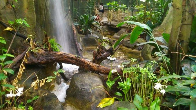 cascade foret amazonienne montpellier