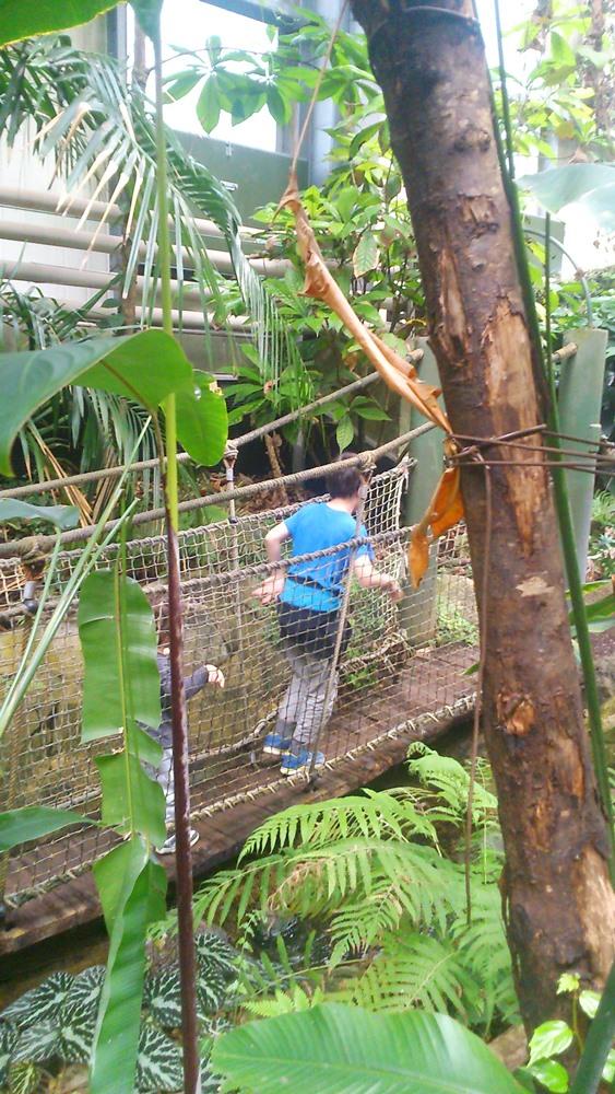 franck et matthieu sur le pont de corde foret amazonienne montpellier
