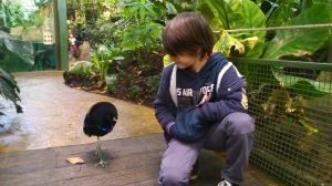 franck et oiseau foret amazonienne mtp