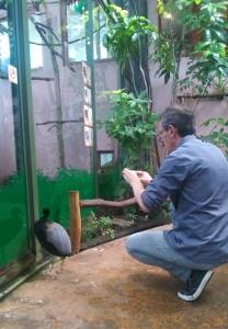 fred et l'oiseau foret amazonienne montpellier