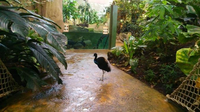 oiseau foret amazonienne montpellier