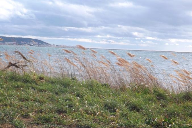 plumeaux fouettes par le vent etang de Thau Bouzigues