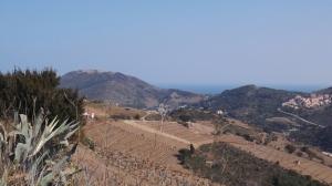 vue sur les vignes et la mer depuis le Fort St Elme