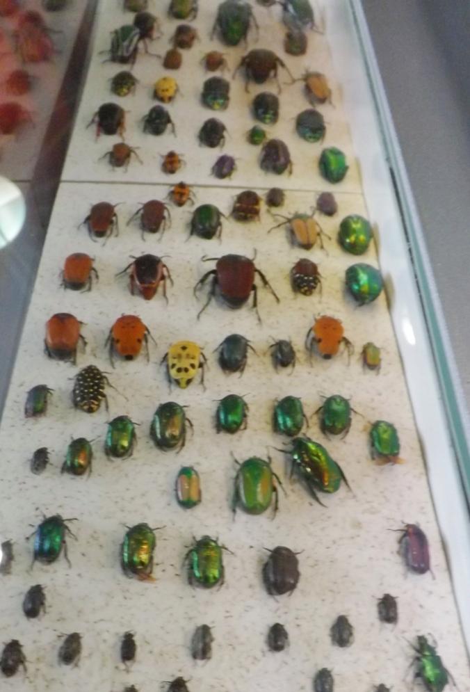 procession de scarabees micropolis