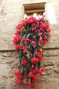 fleurs rouges fenetre pezenas