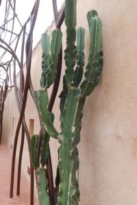 cactus mucem