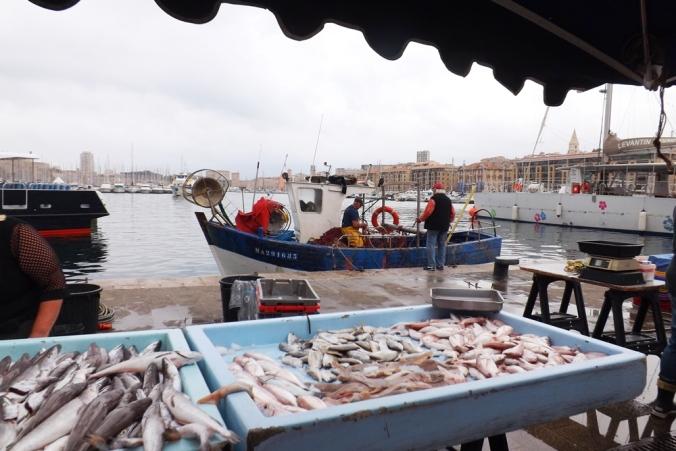 etal poissons vieux port marseille