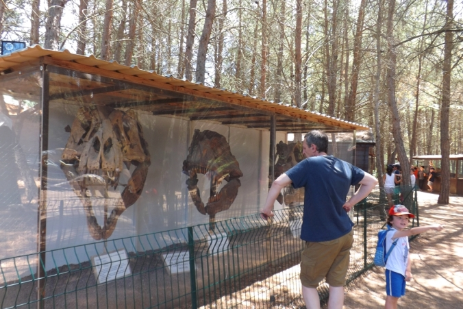 vitrine cranes de dinosaures meze