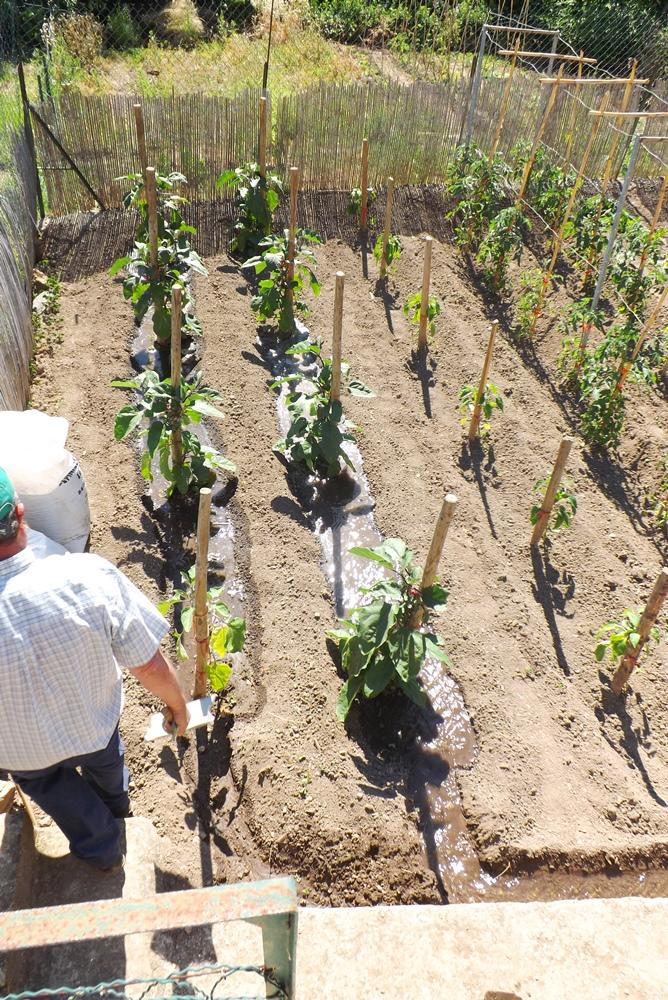 irrigation-dun-jardin-potager-a-vailhan
