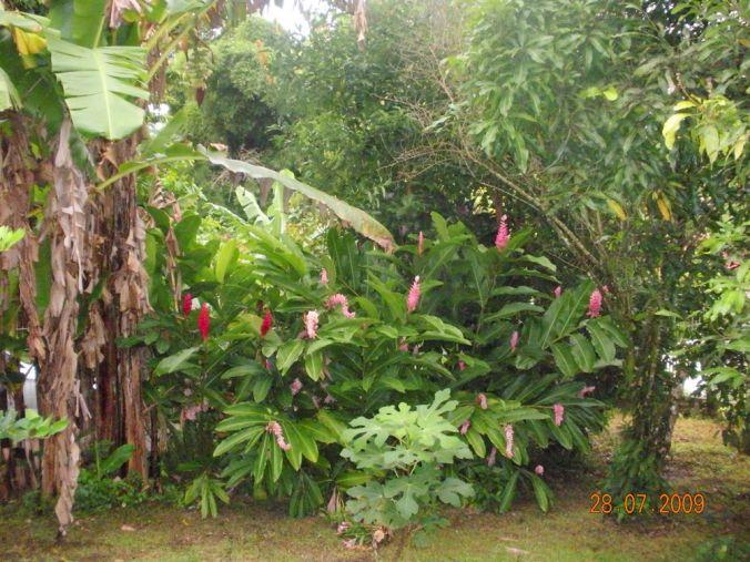 jardin-maison-lamantin-2