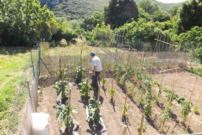 jardin-potager-a-vailhan