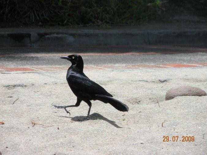 oiseau-sur-la-plage-martinique