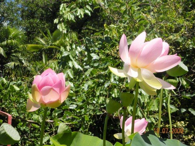 fleurs-bambouseraie
