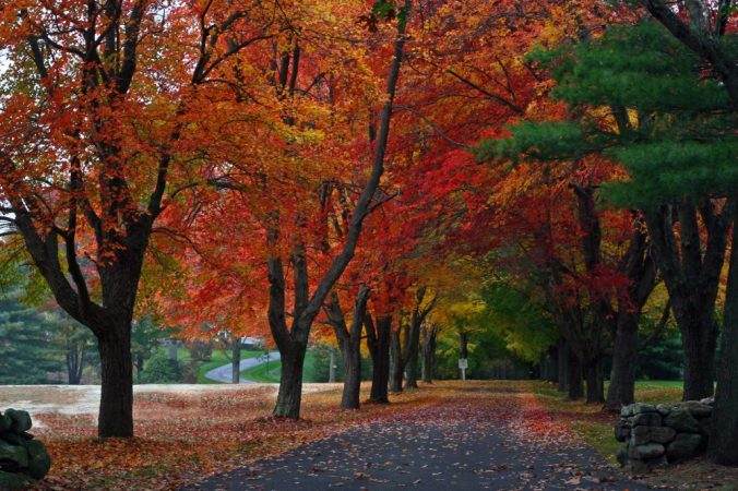 new-england-fall-foliage