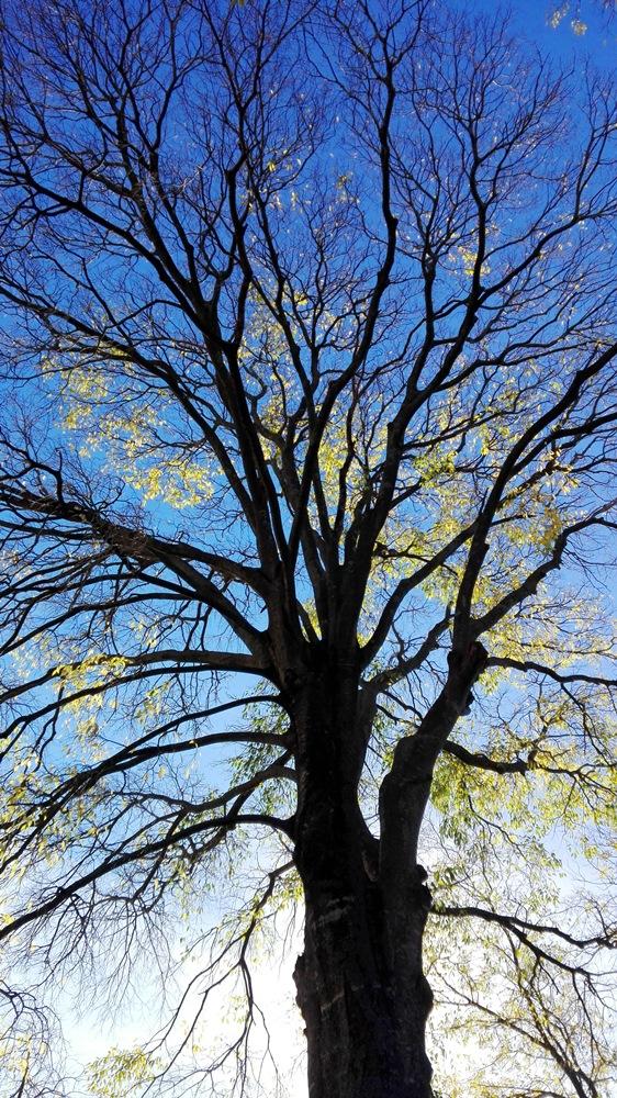 arbre-cassan