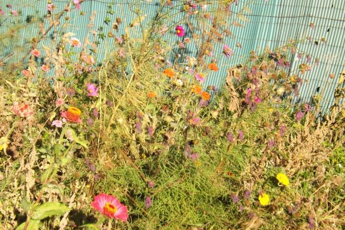 fleurs-besse