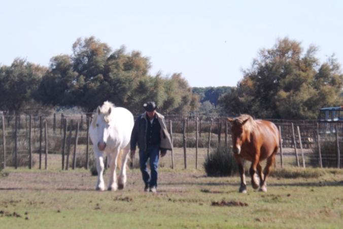 gardian-et-chevaux