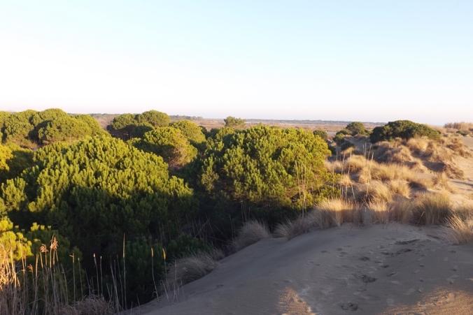 massif-dunaire-espiguette