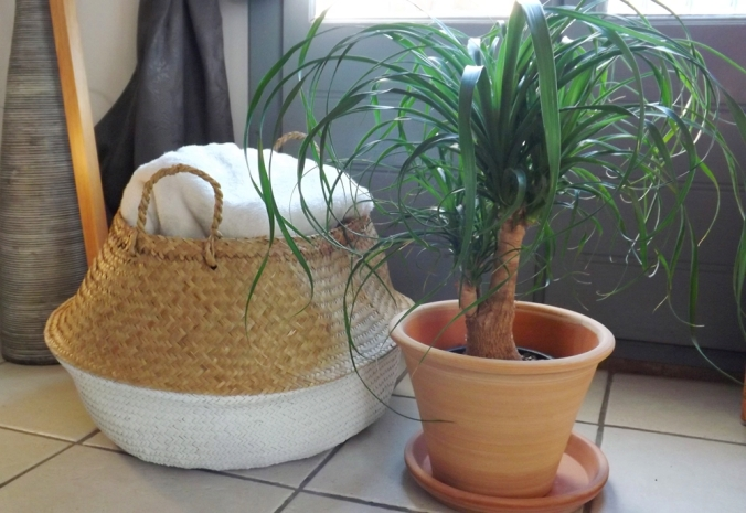 panier-et-plante